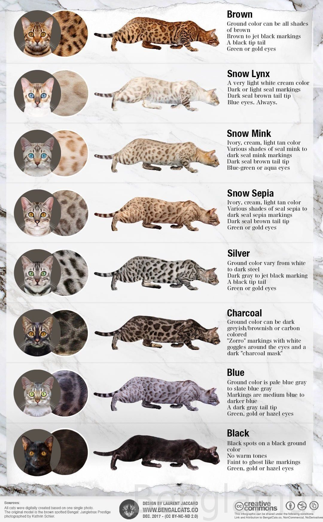 bengal-cat-colors-patterns-coat-infographic